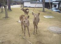 奈良公園の写真・動画_image_920531
