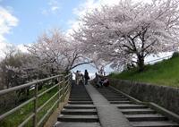 草津川緑地の写真・動画_image_27706