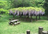 森のカルチャーセンターの写真・動画_image_30918