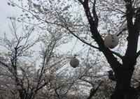 桜の馬場城彩苑の写真・動画_image_71120