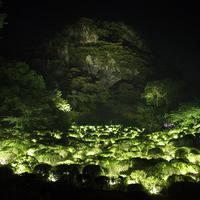 生命は連続する光 - ツツジ谷/Life is Continuous Light - Azalea Valley