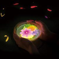 小さきものの中にある無限の宇宙に咲く花々/Flowers Bloom in an Infinite Universe inside a Teacup