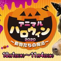 アニマルハロウィン2020~動物たちの魔法~