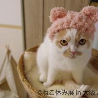 (c)ねこ休み展 in 大阪/ホイ主