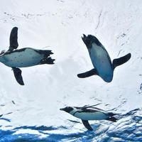 天空のペンギン イメージ