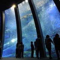 サカナや海の幸の特別展示 イメージ