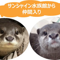 (左)ニコ、(右)シュラ イメージ