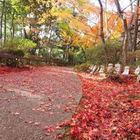 八幡山ロープウェーの写真・動画_image_11813