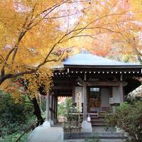 八幡山ロープウェーの写真・動画_image_11886