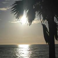 大浜海浜公園の写真・動画_image_126267