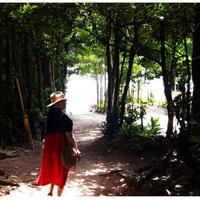 備瀬のフクギ並木の写真・動画_image_127784