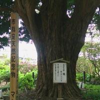 祇園山 安養院の写真・動画_image_134706