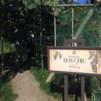 仏蘭西料理 BON-CHIC(ボンシィク)の写真・動画_image_13543