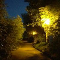 竹林園の写真・動画_image_162630
