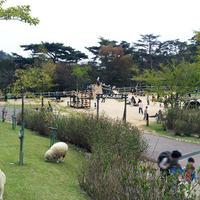 神戸市立六甲山牧場の写真・動画_image_1885