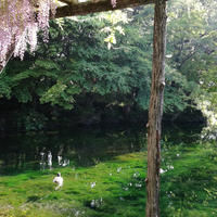 富士山本宮浅間大社の写真・動画_image_191924