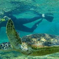 シギラビーチの写真・動画_image_202167