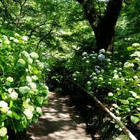 矢田寺の写真・動画_image_283362