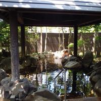 阿蘇坊中温泉夢の湯の写真・動画_image_2970