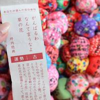 圓満寺の写真・動画_image_301518
