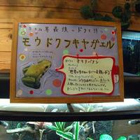 淡島マリンパークの写真・動画_image_3451