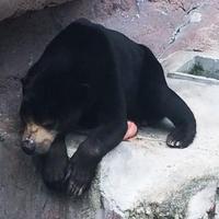 天王寺動物園の写真・動画_image_39762