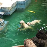 天王寺動物園の写真・動画_image_40950