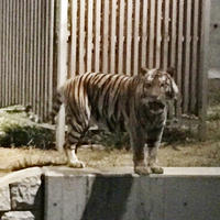 天王寺動物園の写真・動画_image_40952