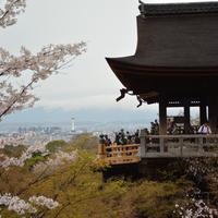 清水寺の写真・動画_image_421329