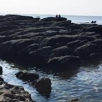 天神島臨海自然教育園の写真・動画_image_46135