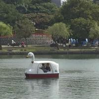 レンタルボートの写真・動画_image_47476