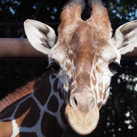 野毛山動物園の写真・動画_image_53801
