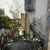 水の都大垣の湧き水の写真・動画_image_6425