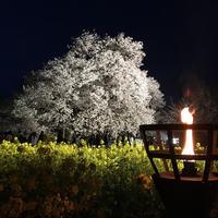 一心行の大桜の写真・動画_image_72216