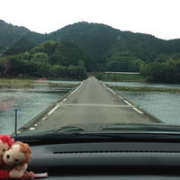 佐田沈下橋の写真・動画_image_75947