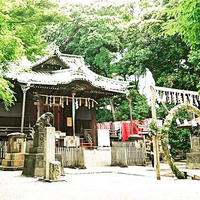 代々木八幡宮の写真・動画_image_81389