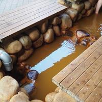 金の湯の写真・動画_image_92915