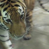 天王寺動物園の写真・動画_image_144941