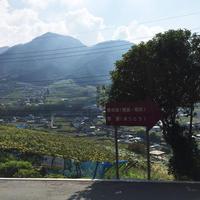 甲州市勝沼ぶどうの丘の写真・動画_image_150664