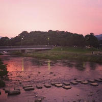鴨川デルタの写真・動画_image_165215