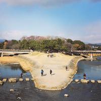 鴨川デルタの写真・動画_image_165641
