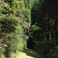 旧国鉄宮原線遊歩道の写真・動画_image_165843