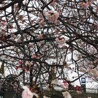 渚親水公園・ムーンテラスの写真・動画_image_168497