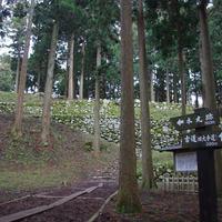 七尾城山の写真・動画_image_171553