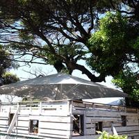 Cafe Madu ENOSHIMAの写真・動画_image_180762