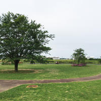 三里塚さくらの丘の写真・動画_image_182260
