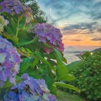 稲村ケ崎海浜公園の写真・動画_image_182404
