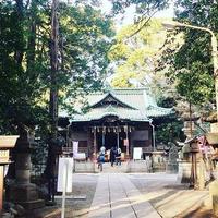 代々木八幡宮の写真・動画_image_182822