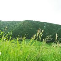 仙石原湿原植物群落の写真・動画_image_191090