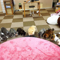 Cat Cafe ねころびの写真・動画_image_207602